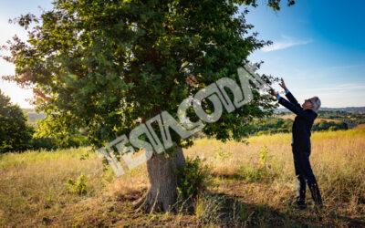 Senior Botanist touching leaves of the magic tree