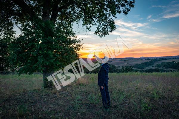 Senior Botanist and the magic tree at sunset
